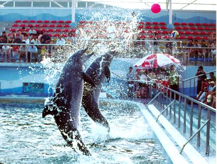 新澳海底世界,海豚表演馆