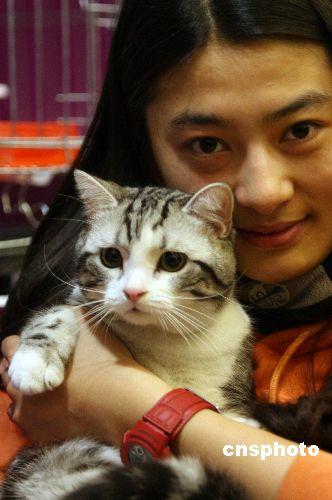 世界名猫京城 斗秀图片
