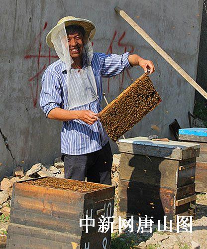 养蜂人_养蜂人年收入