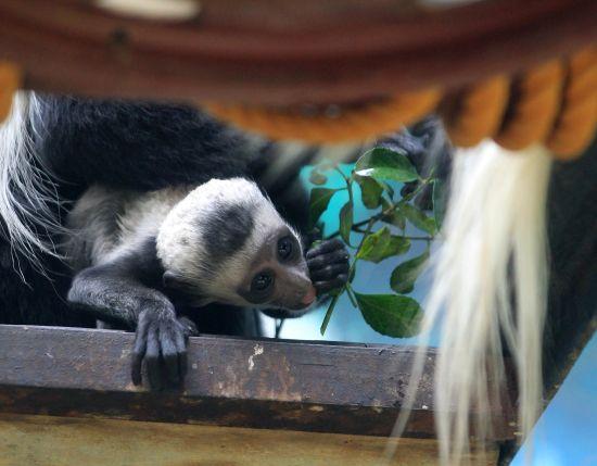美洲狮非洲水羚落户石家庄动物园——中国新闻网